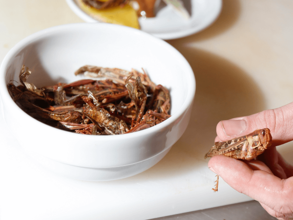 Eating Insects Will Soon Go Mainstream As Bug Protein Is Set To Explode Into An $8 Billion Business